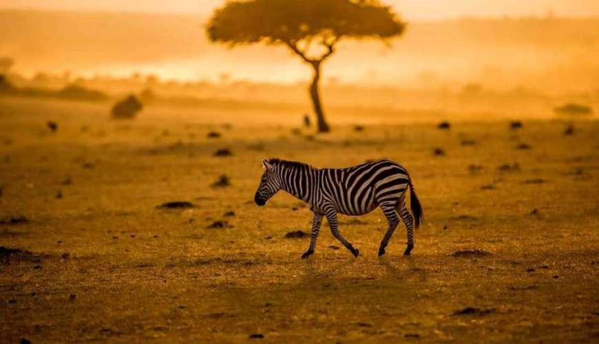 Voyage en Afrique du Sud : quelle est la meilleure saison ?