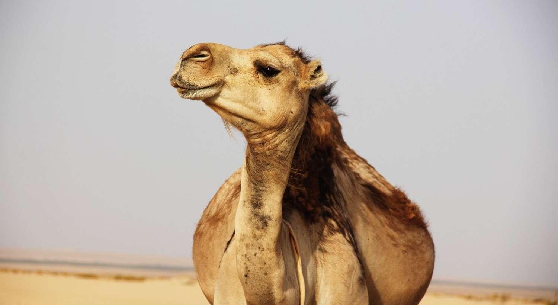 Partir en Vacances en Tunisie