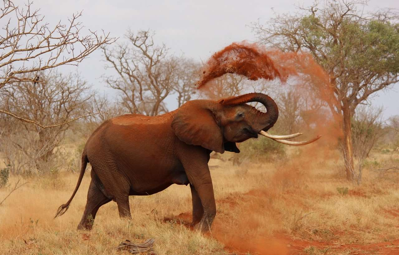 Où voyager en Afrique ? Top 5 des meilleures destinations touristiques