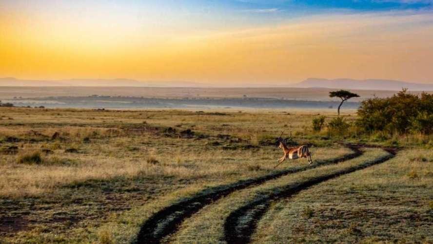 Voyage en Afrique : Kenya