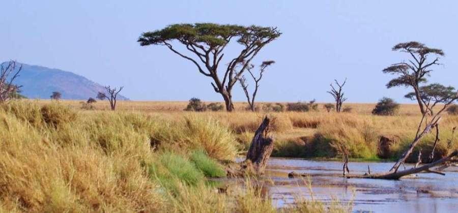 Voyage en Afrique : Tanzanie
