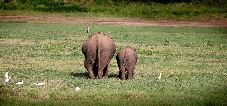 Séjour dans le sud du Sri Lanka: les parcs nationaux incontournables